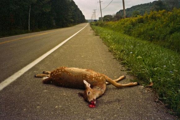 tryna deer