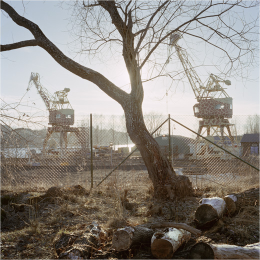 tree and cranes